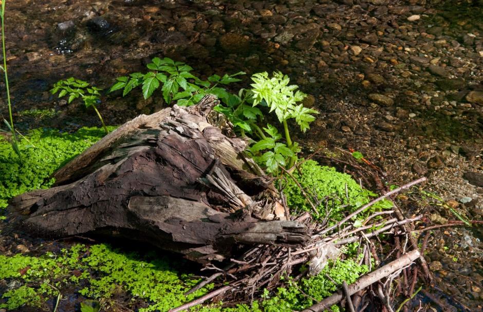 Loggy island in a stream