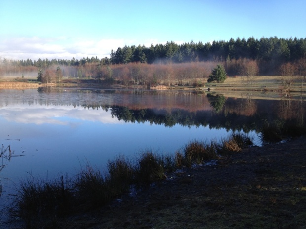 Reflection and mist on Green Timbers Lake