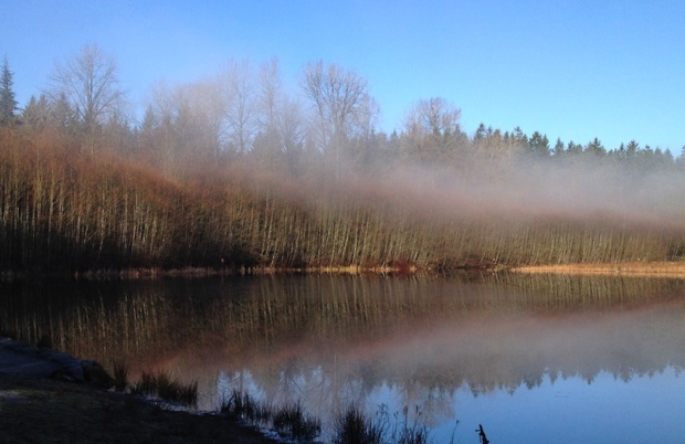 Mist lifting off of Green Timbers Lake